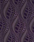 Sarah, African violet