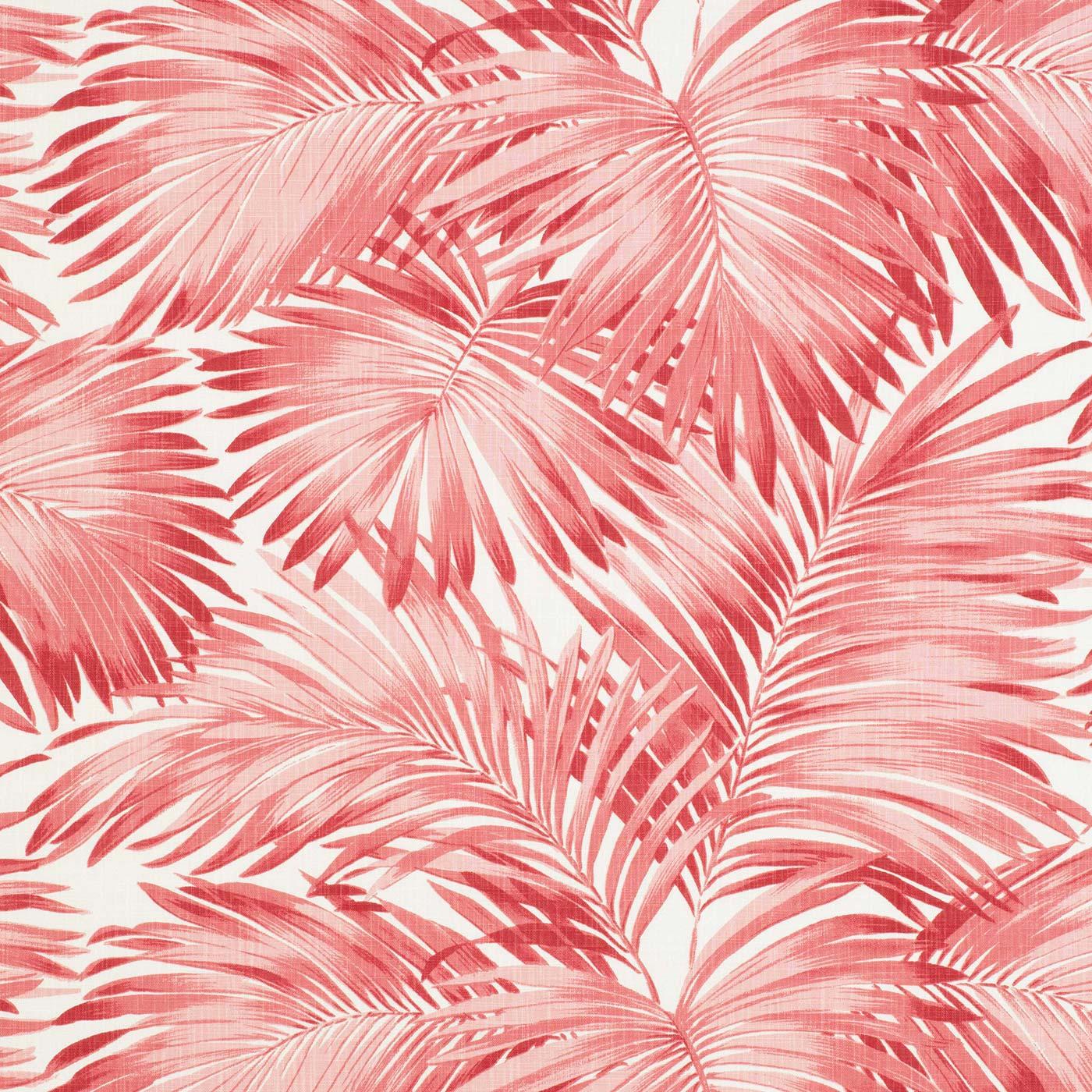 Palmae Pink