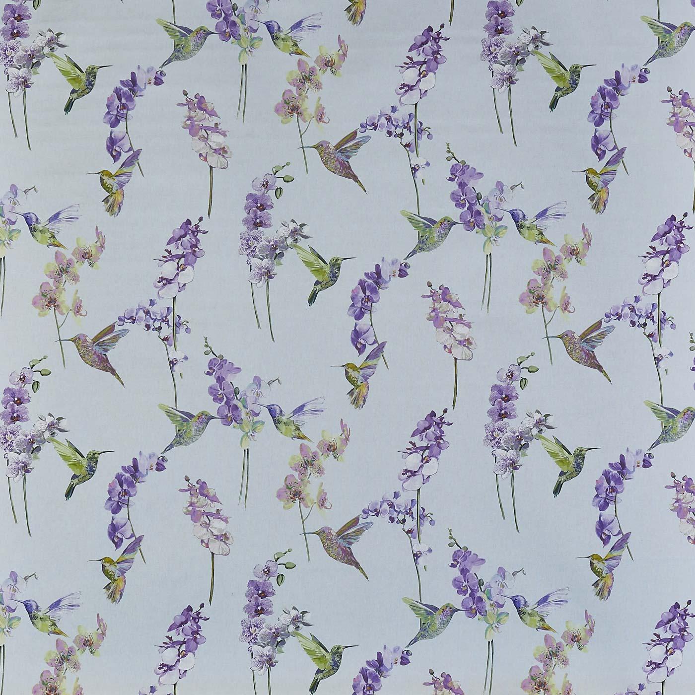 Humming Bird Hyacinth