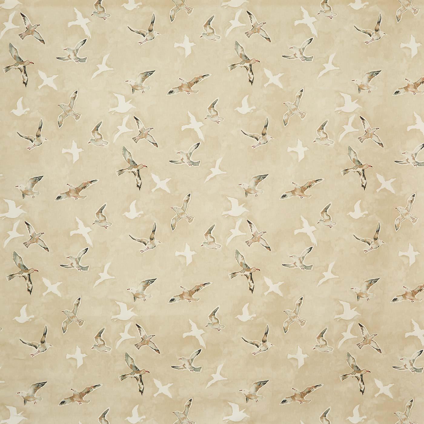 Seagulls Sand