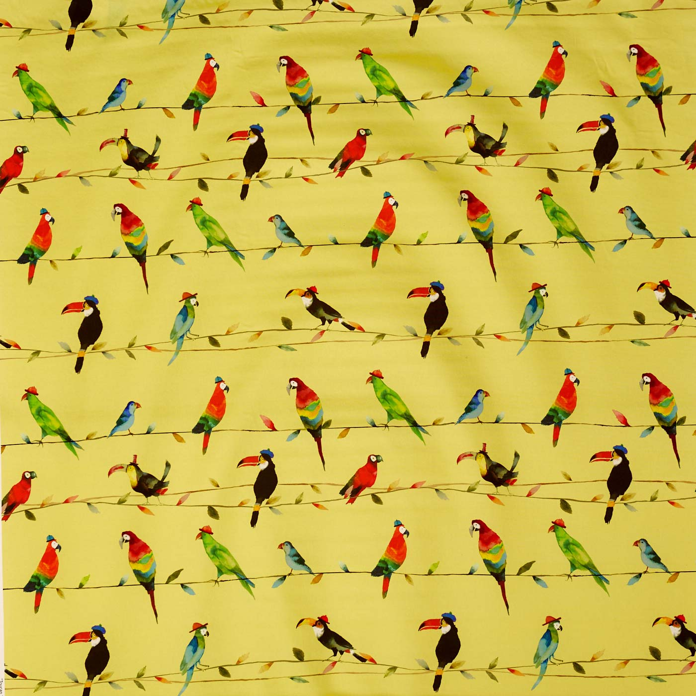 Toucan Talk Zest