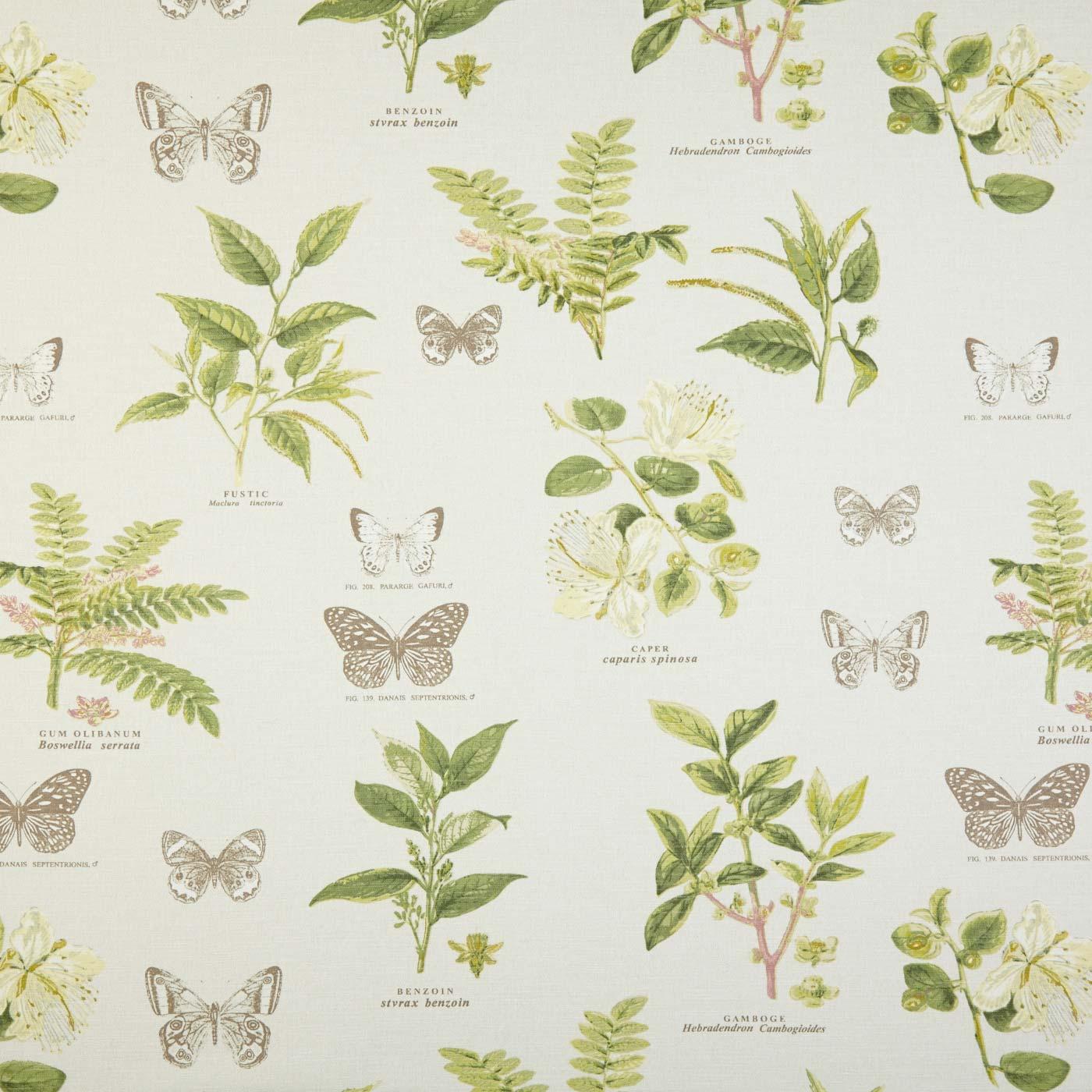 Botany Acacia