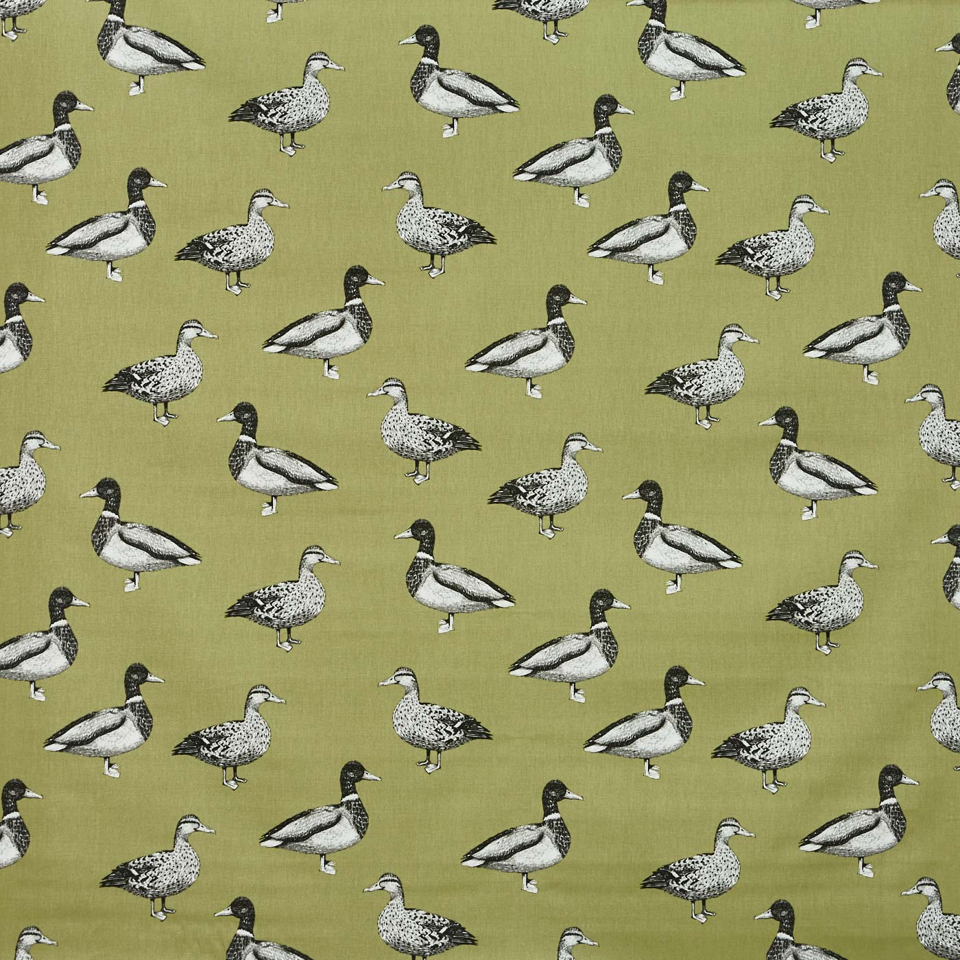 Duck Willow