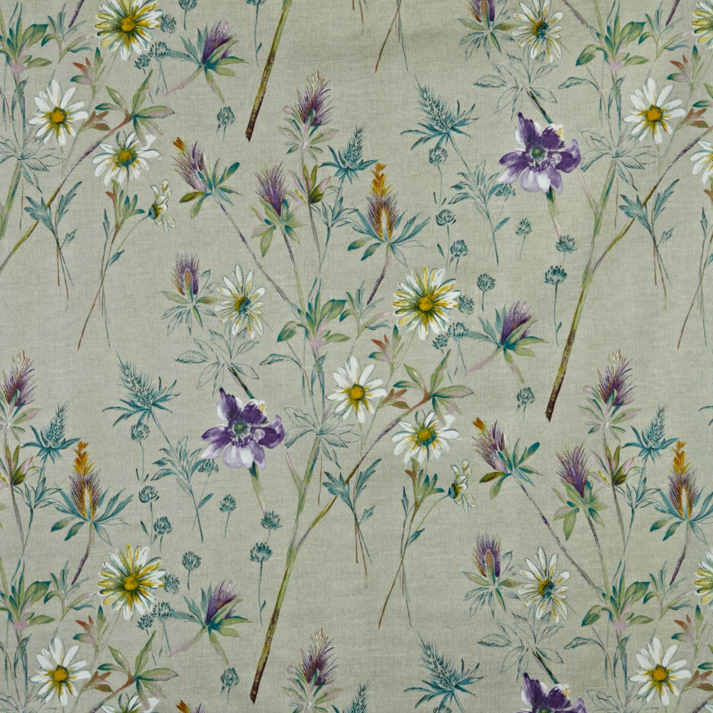 Wordsworth Foxglove