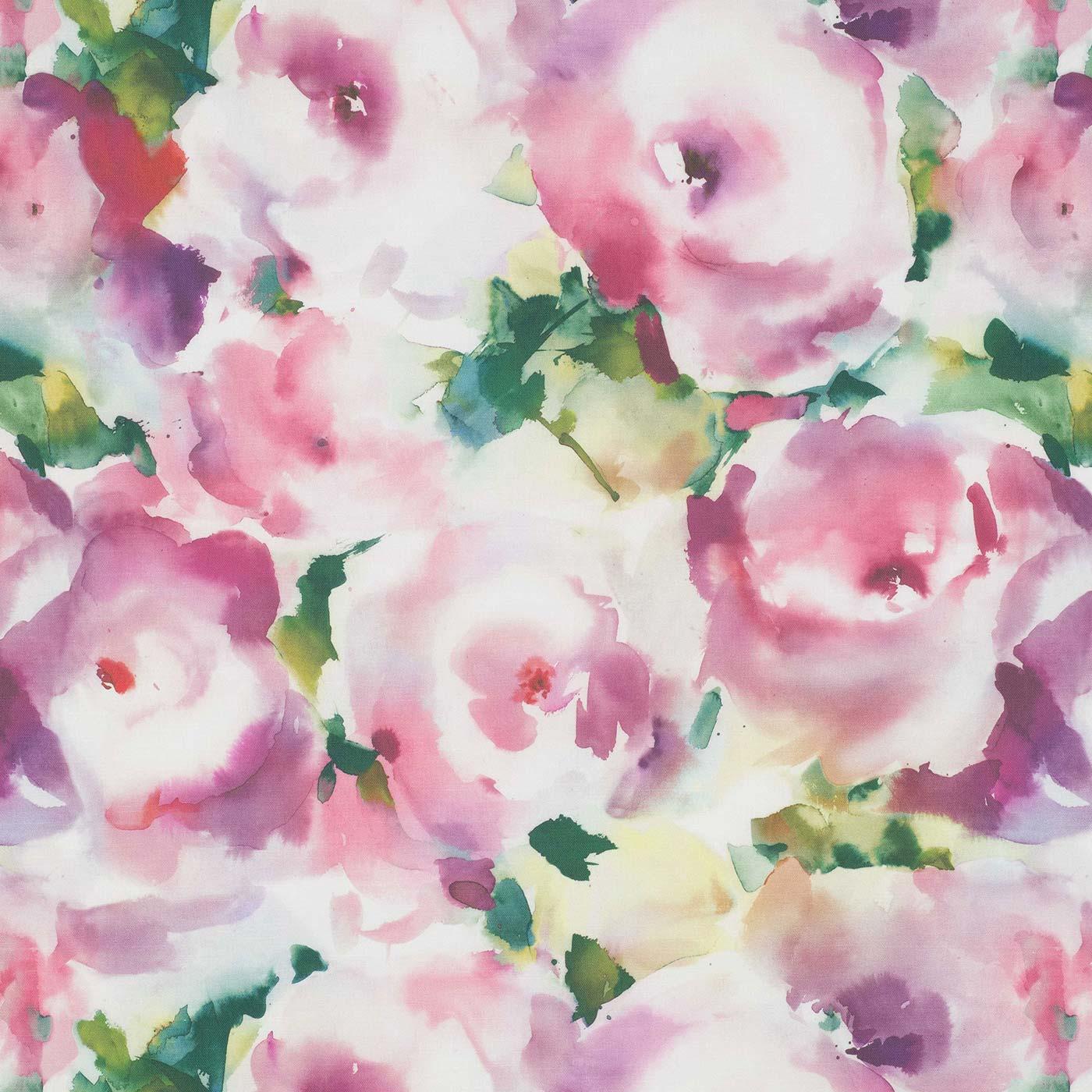 Rosa Peony